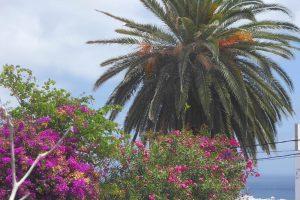 Lanzarote Ferienwohnung El Campo Blick