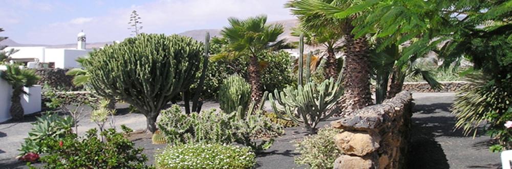 Lanzarote Miramar Studio Gartenblick
